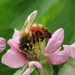 La insustituible labor de las abejas, en Televisión.